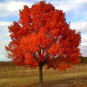 Large Trees Available Online Best Prices