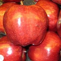 "Malus x ""Red Delicious"" Thumbnail"