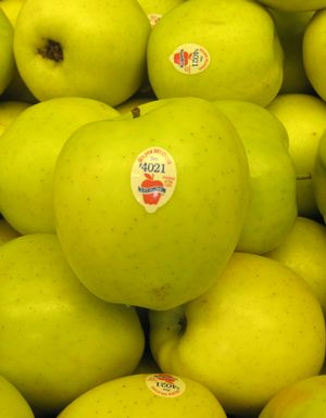 "Malus x ""Golden Delicious"" Thumbnail"