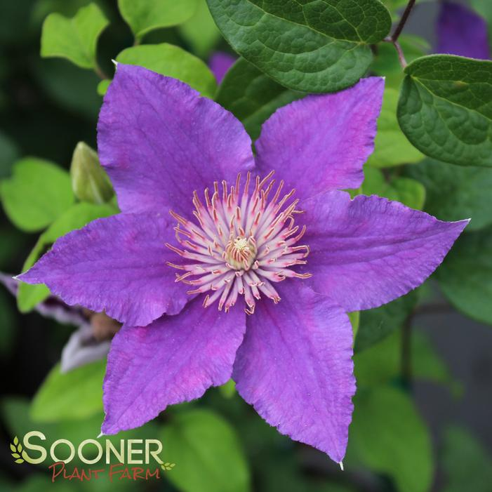 Image Property of Sooner Plant Farm